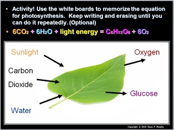 Carbon cycle movie worksheet answers