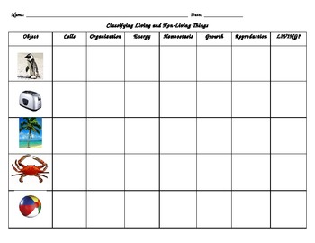 Classification of living things worksheet doc