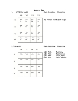 Dihybrid cross worksheet answers hamster