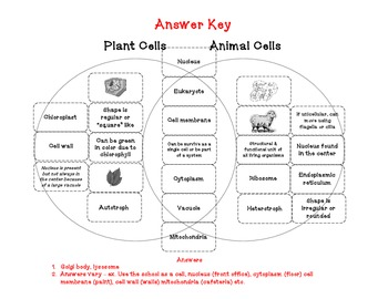 Cells alive animal cell worksheet answer key