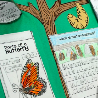 Explore the Butterfly Life Cycle
