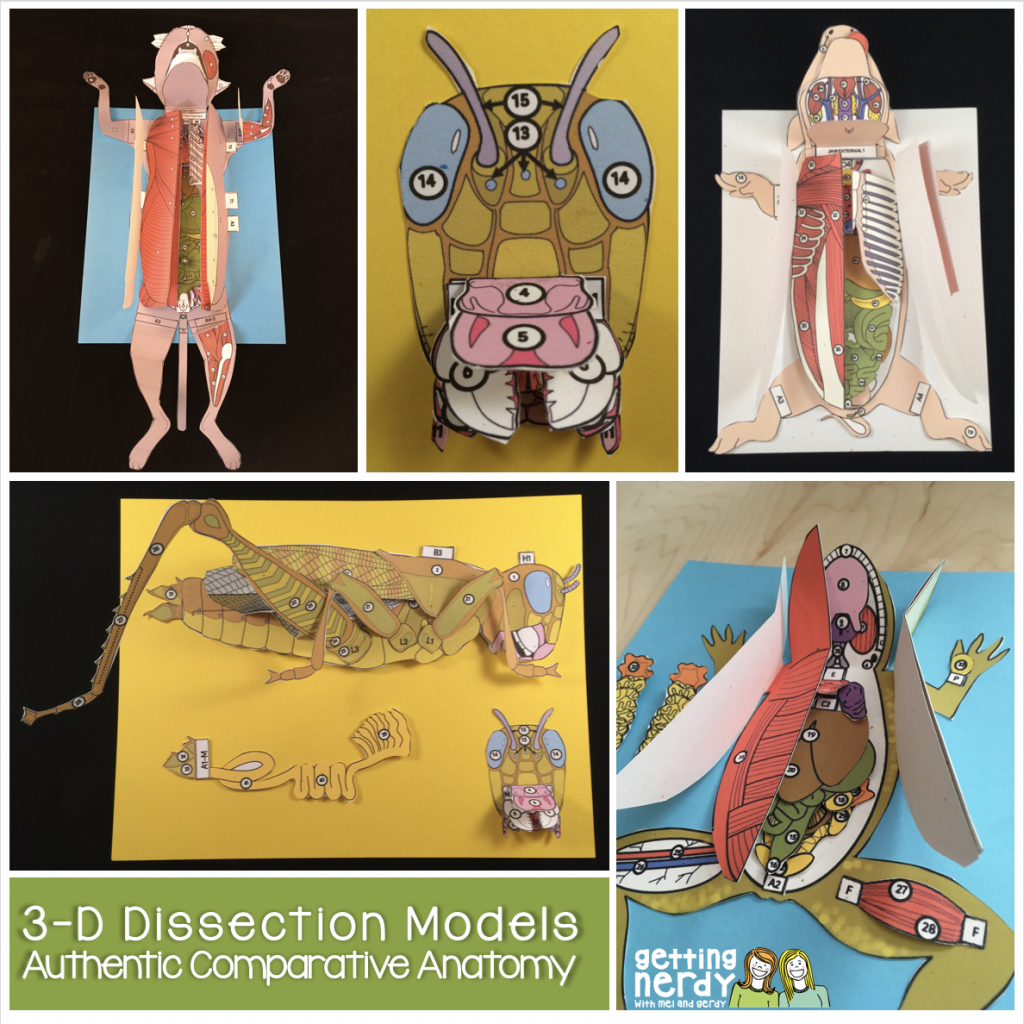 All About 3-D Paper Dissection Models