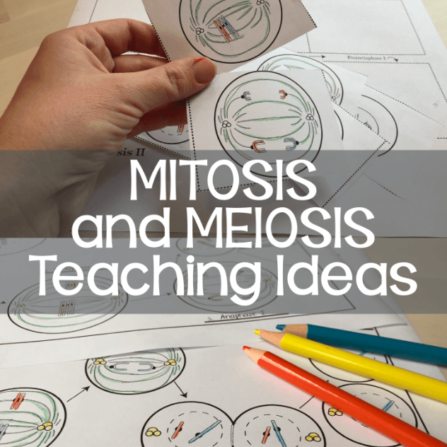 How I Teach Mitosis and Meiosis