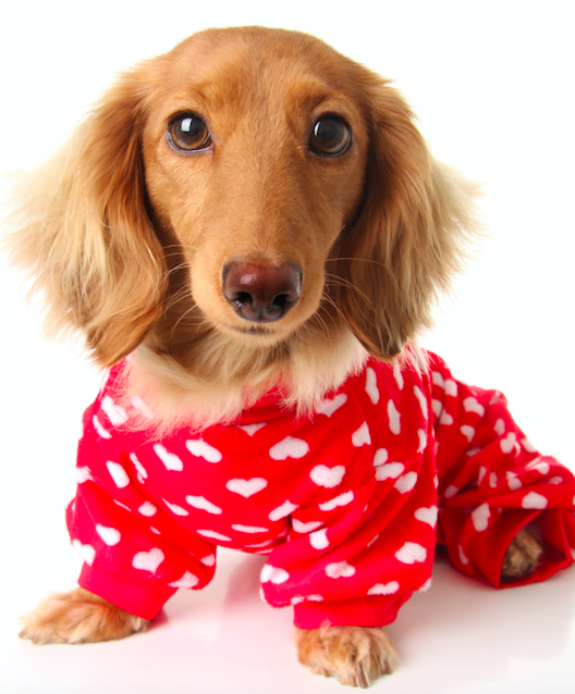 How You Can Get More Sleep This Year (As Told By Dogs in Pajamas)