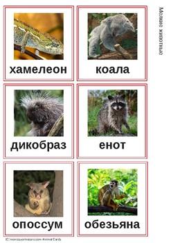 Животные -  Монтессори Каточки