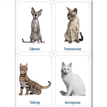 Породы кошек. Демонстрационные карточки с фактами