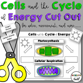 Cells and the Cycle of Energy Cut Out for Notes, Review, o