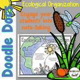 Ecological Organization Doodle Docs for Engaging Student Note-Taking