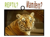 ( 15) Reptile o Mamifero PowerPoint in Spanish Retile or mammal