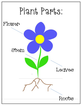 {1st Grade} Seeds & Plant Parts Lesson Plan