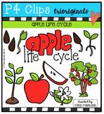 Apple Life Cycle  {P4 Clips Trioriginals Digital Clip Art}