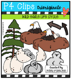 Bald Eagle Life Cycle {P4 Clips Trioriginals Digital Clip Art}