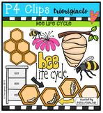 Bee Life Cycle  {P4 Clips Trioriginals Digital Clip Art}