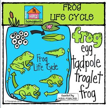 Frog Life Cycle {P4 Clips Trioriginals Digital Clip Art}