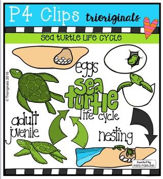 Sea Turtle Life Cycle  {P4 Clips Trioriginals Digital Clip Art}