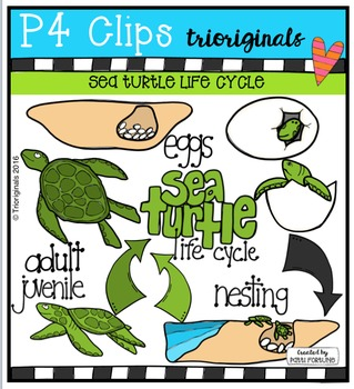 Sea Turtle Life Cycle  {P4 Clips Trioriginals Digital Clip Art}