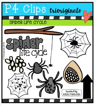 Spider Life Cycle {P4 Clips Trioriginals Digital Clip Art}