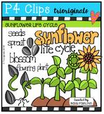 Sunflower Life Cycle {P4 Clips Trioriginals Digital Clip Art}