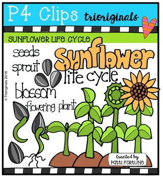 Sunflower Life Cycle {P4 Clips Trioriginals Digital Clip Art}