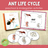 Ant Life Cycle Activity Set