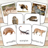 Montessori Desert Animals Toob 3 Part Cards