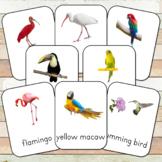 Montessori Exotic Birds Toob 3 Part Cards
