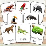 Montessori Rainforest Toob 3 Part Cards