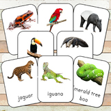Montessori Rainforest Toob 3 Part Cards