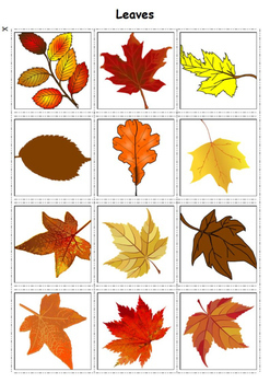 Autism Matching File Folders - Fall
