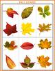Autism Matching File Folders - Fall