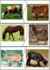 Farm Animals & Their Babies Matching Activity