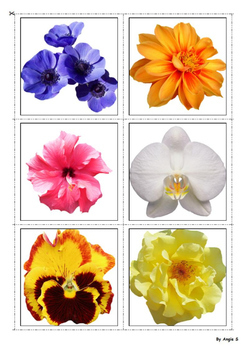 Flowers Color to Black & White Matching Activitty