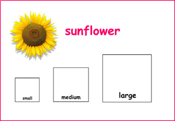 Flowers Sorting by Size