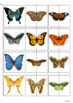 Matching Halves- Butterflies