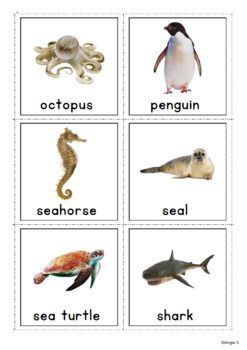 Ocean Animals Vocabulary Photo Cards for Special Education
