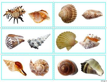 Same or Different- Seashells
