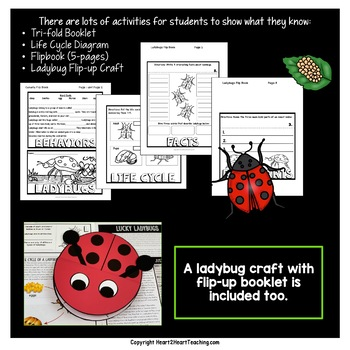 All About Ladybugs Craft Project and Activity Pack