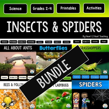 Insects and Spiders Bundle of Activities