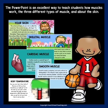 All About Our Muscular System PowerPoint