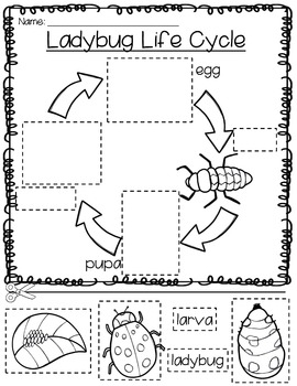 Original on kindergarten ladybug worksheet images