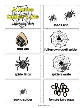A House Spider's Life by John Himmelman, Guided Reading Lesson Plan  Level I