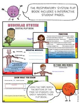 Muscular System Digital Flip Book