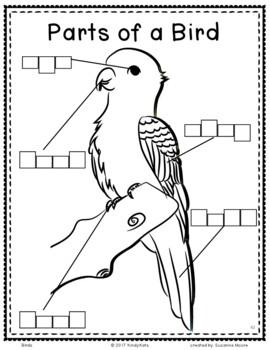 Birds: Songs & Rhymes