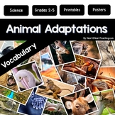 Animal Adaptations Activities & Vocabulary Posters