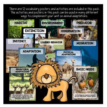 Animal Adaptations Activities & Vocabulary Posters