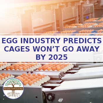 (Animal Agriculture) Egg Industry Predicts Cages won't go away by 2025