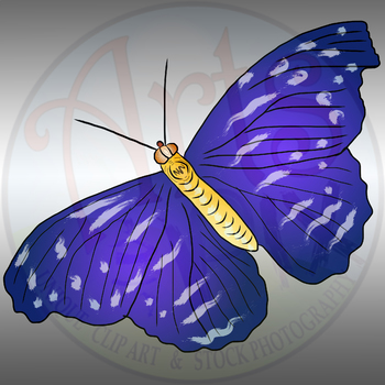 """""""Animals"""" Clipart - BUTTERFLY - png"""