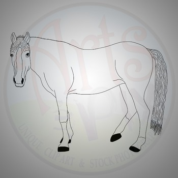 """""""Animals"""" Clipart - HORSE - png"""