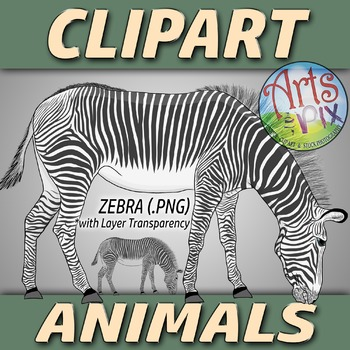 """Animals"" Clipart - ZEBRA - png"