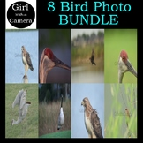 *BUNDLE* 8 High Resolution Bird Photos